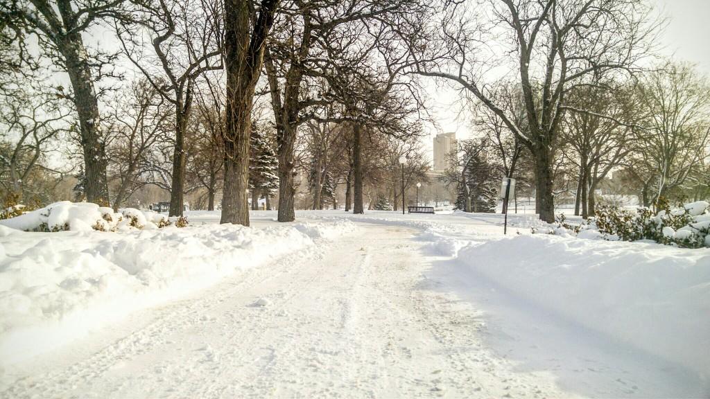 Snowy Loring Park
